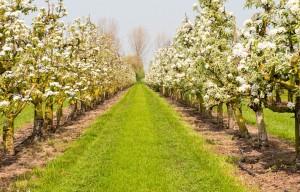 bloesem boomgaard vlooswijk lange tafels