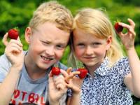 aardbeien plukken Lange Tafels Junior Vaderdag 2014